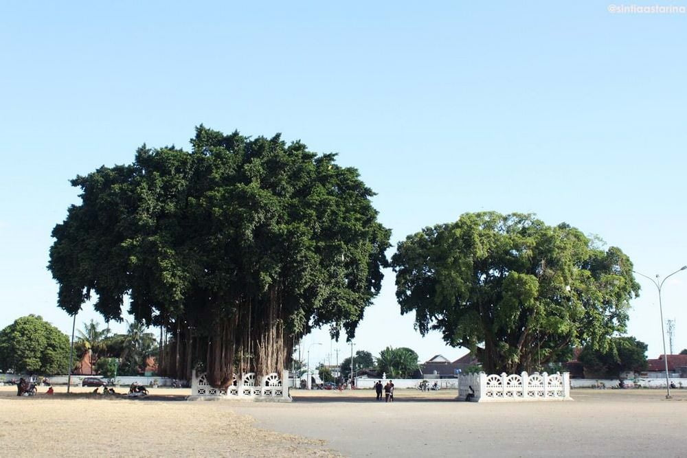 Pohon Beringin Kembar di Alun-alun Selatan dan Perumpamaannya
