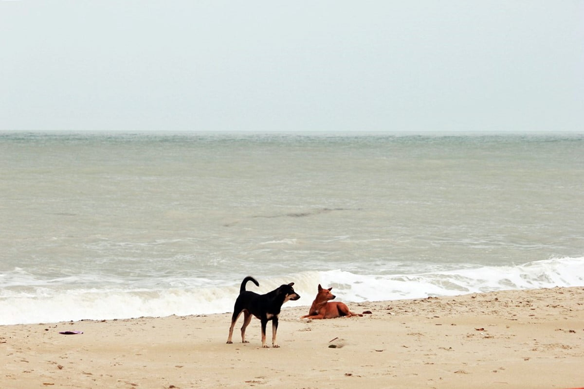 Enggak Pernah Bosan Main ke 7 Pantai Terindah di Bangka Ini - Pantai Tikus Emas (6)